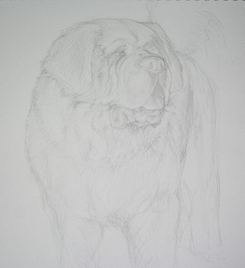 more refined, but still basic sketch of a dog