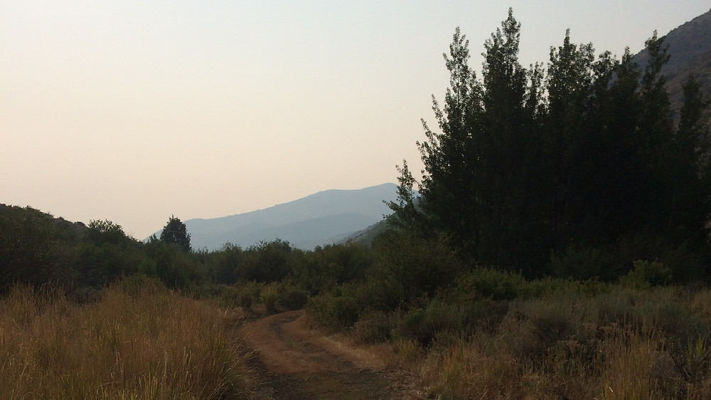 A forest service road in the Humboldt-Toiyabe national forest, northern Nevada