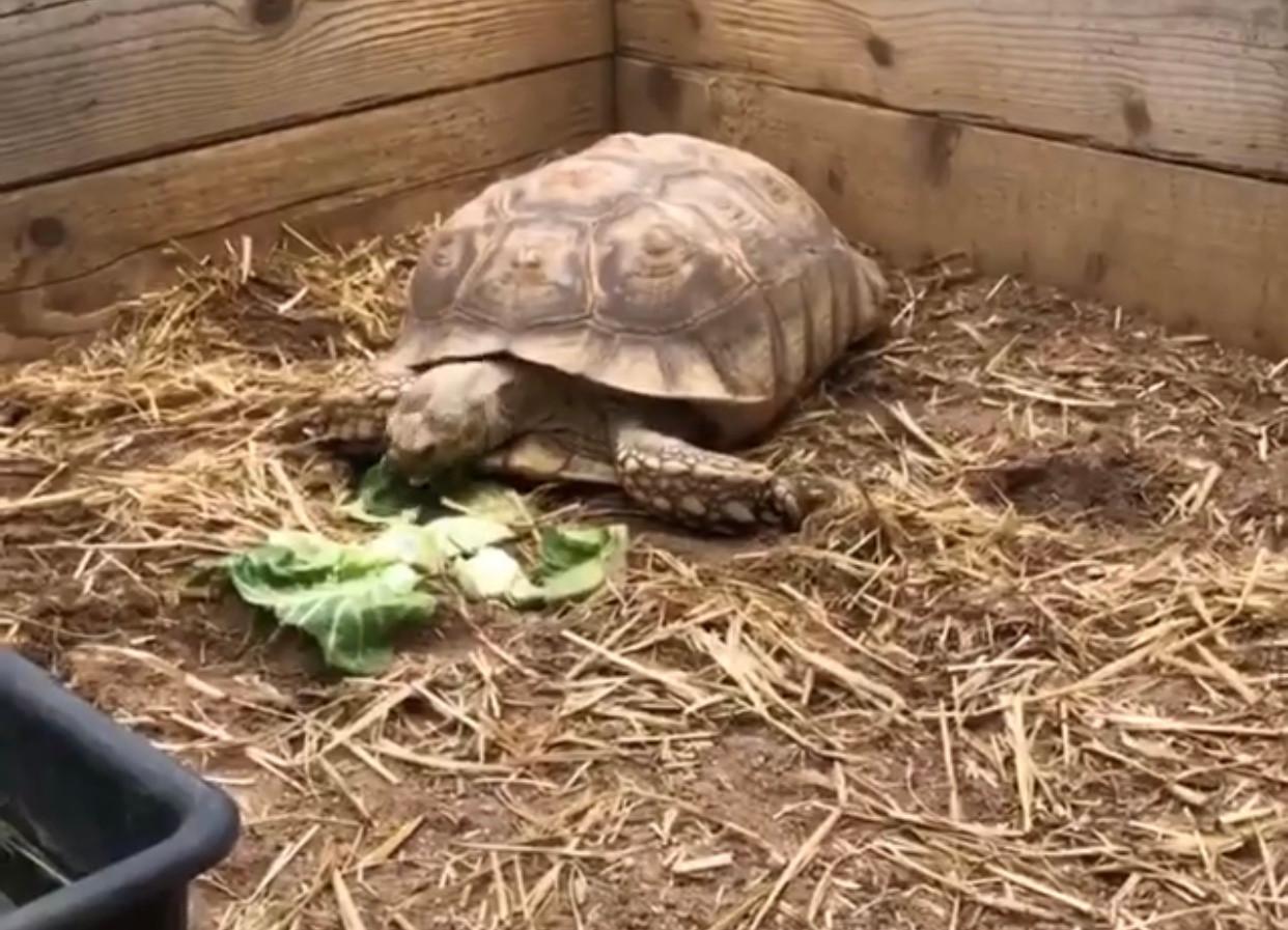 Lily munching her veggies