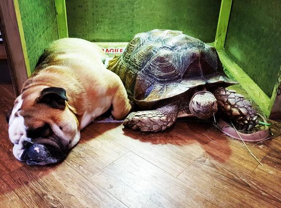 Arthur & Syril having a snooze & a snack