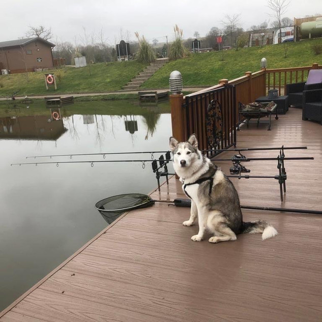 Grebe and Swan lodge are dog friendly