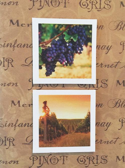 Snap Shots Vineyard 132A/12