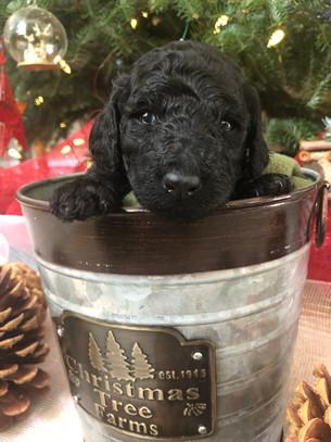 bucket of puppies