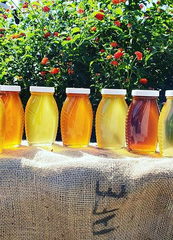 Random Honey 6 Pack