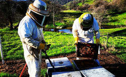 sierra_honey_farm_12568799_7411629993531