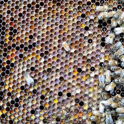 sierra_honey_farm_11373800_1113467262015