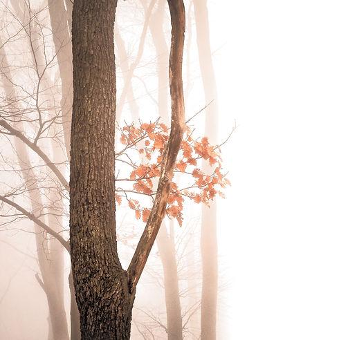 Misty Forest_edited.jpg