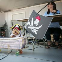 Pet Costume Contests