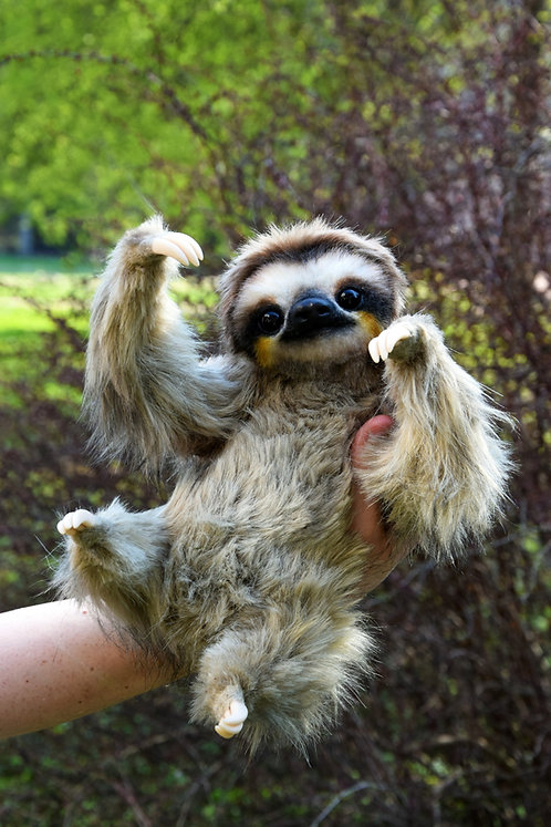 Sloth EXPEDITED