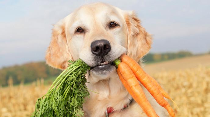 Dog - Veggie lover.jpg