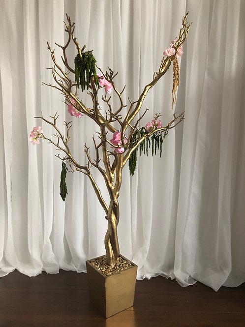 Gold Manzinita Trees