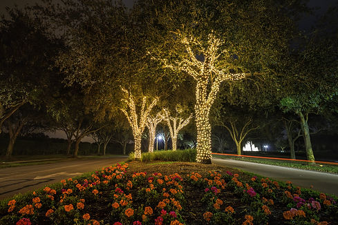 Christmas light decorations on trees at