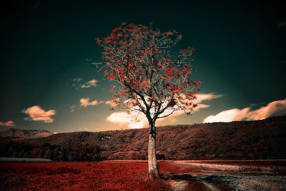 Red tree image from SplitShire