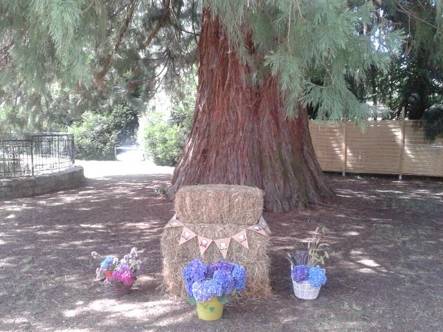 Au pied du Séquoia