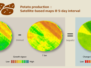 Tracking potato farming with satellite images and change analyses is … well … small potatoes!