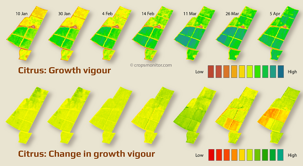 Infographic showing how growth vigour changes over time in citrus orchards