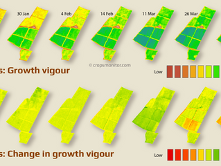 How satellites track changes in citrus growth