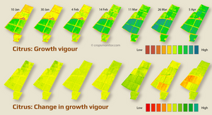 Growth vigour and changes in growth vigour of citrus orchards