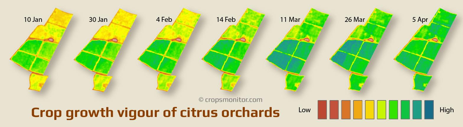 Growth vigour maps of citrus orchards