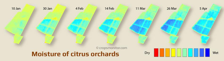 Moisture maps of citrus orchards