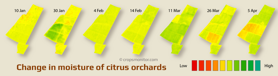 Changes in moisture maps of citrus orchards