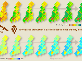 Satellite-based intelligence for growing grapes