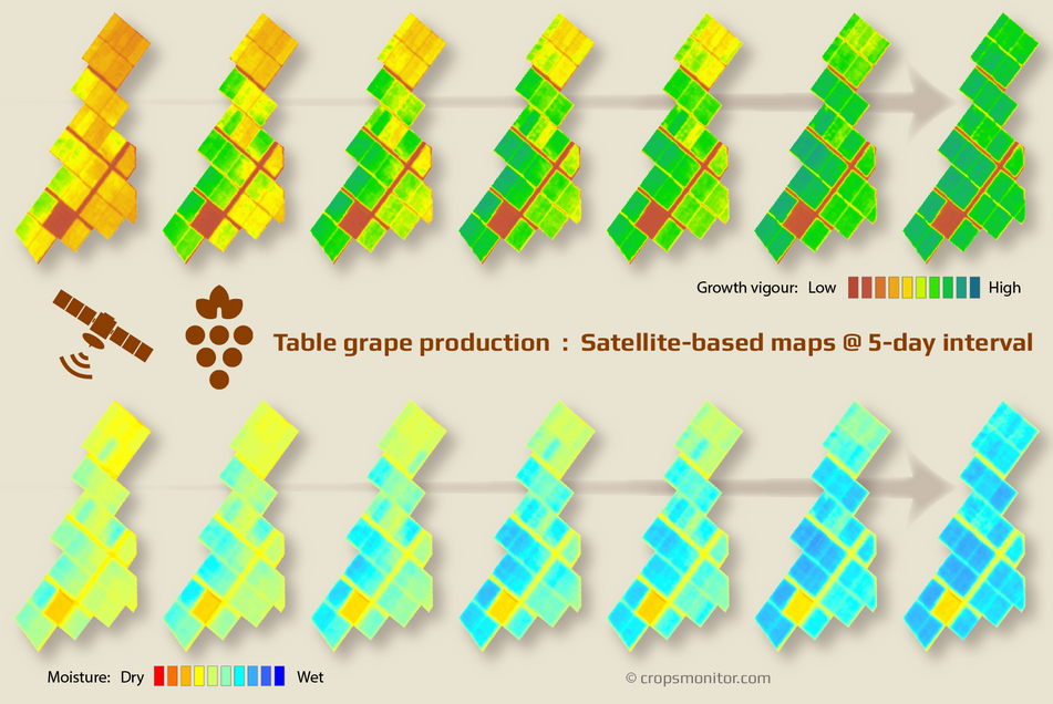 table-grapes_growth_vogour_cropsmonitor_2x.png