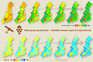 Infographic showing 5-day interval satellite maps of table grape vineyards