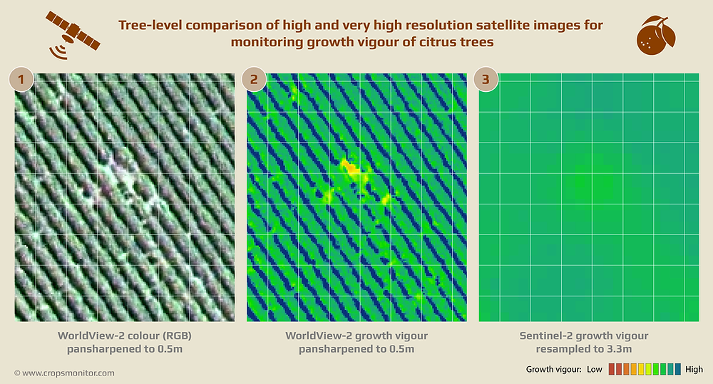 Tree-level comparison of high and very high resolution satellite images for monitoring growth vigour in citrus trees