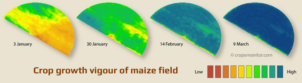 Growth vigour maps of a maize field