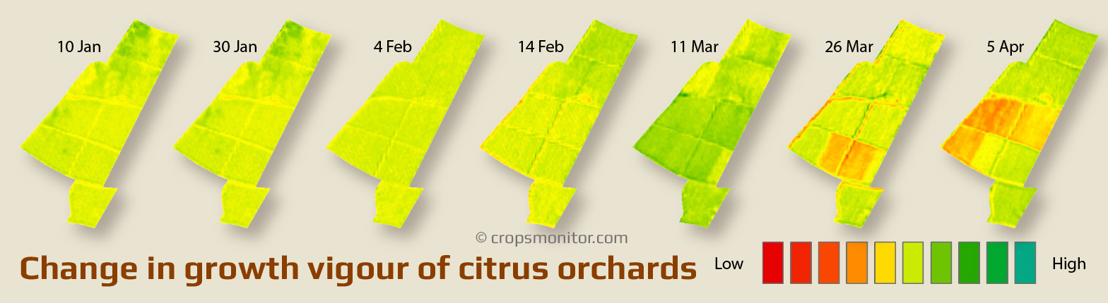 Changes in growth vigour maps of citrus orchards