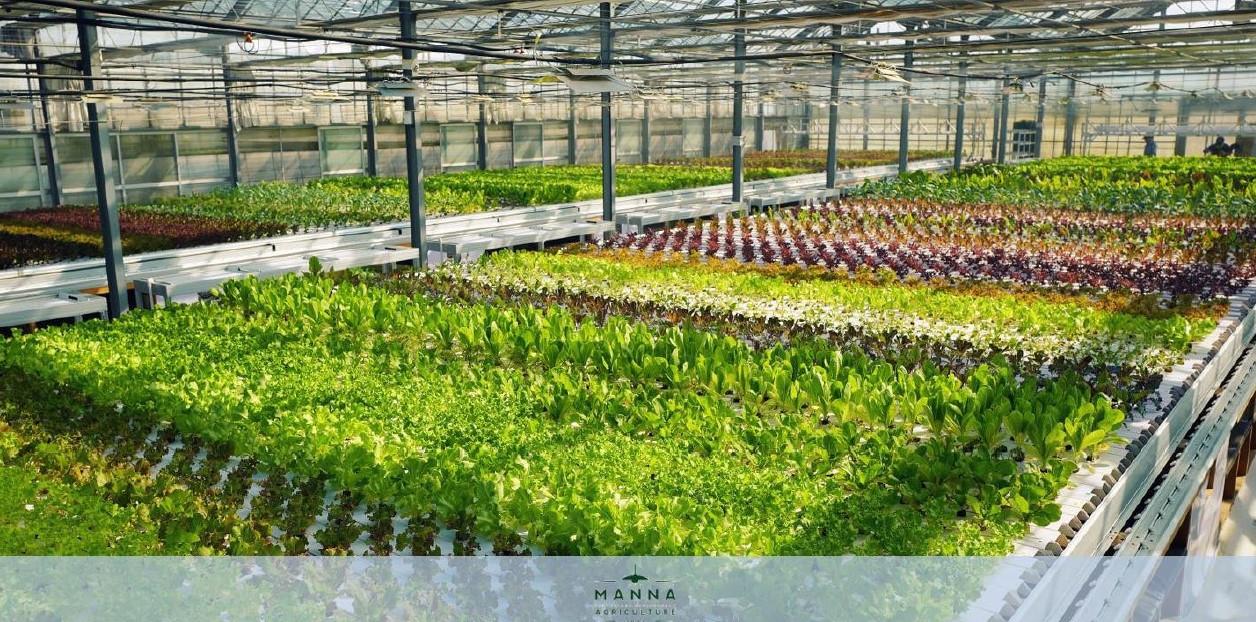 Manna farms Z-Korea