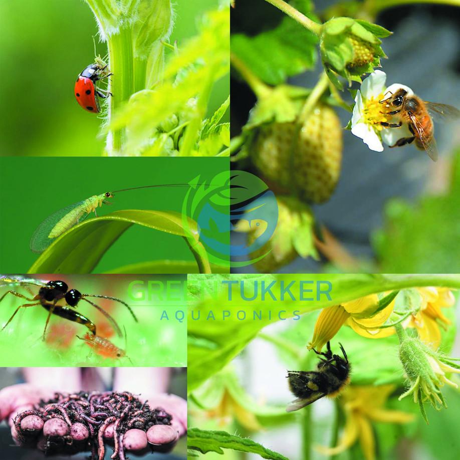 Aquaponics bio-natural pest control & pollination
