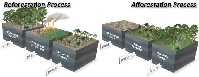 Reforestation Afforestation