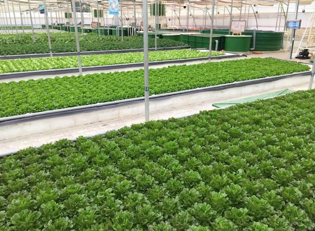 Madhavi Organic Farms 2017-2018
