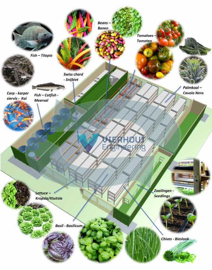 Vierhout Aquaponics infographic
