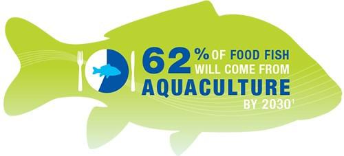 GAA-Food-Supply-Infographic-62-percent-f