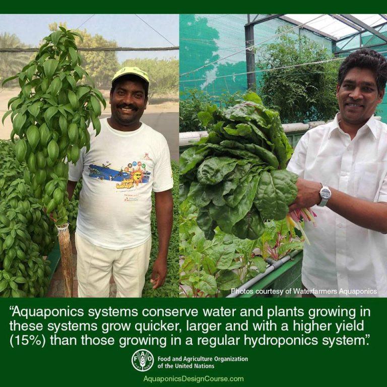 Aquaponics efficient systems