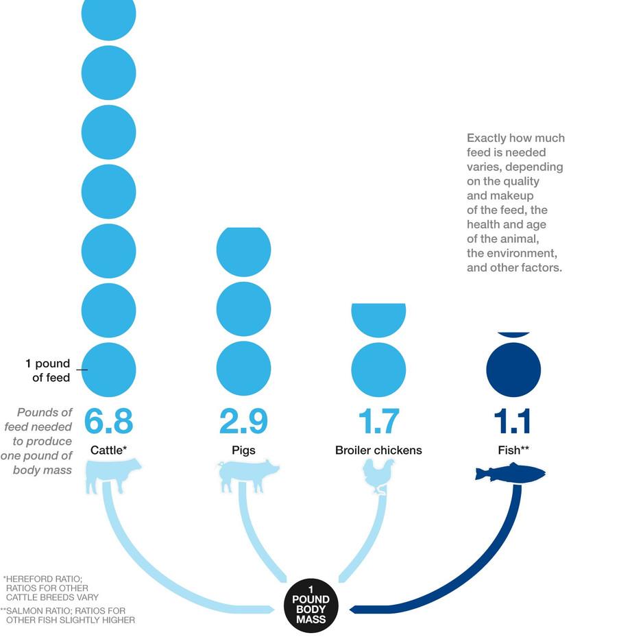 Infographic Feed Ratio