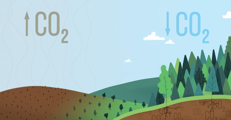 illustration-afforestation-reforestation
