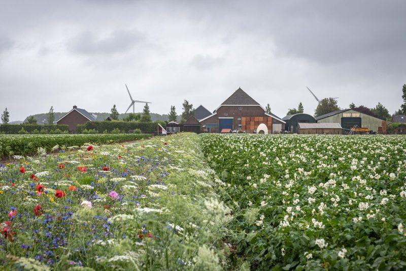 Biologische Agricultuur & bloemenweides