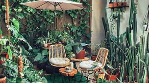 Como usar plantas dentro de casa