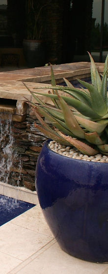 Blue pot with Aloe ferox