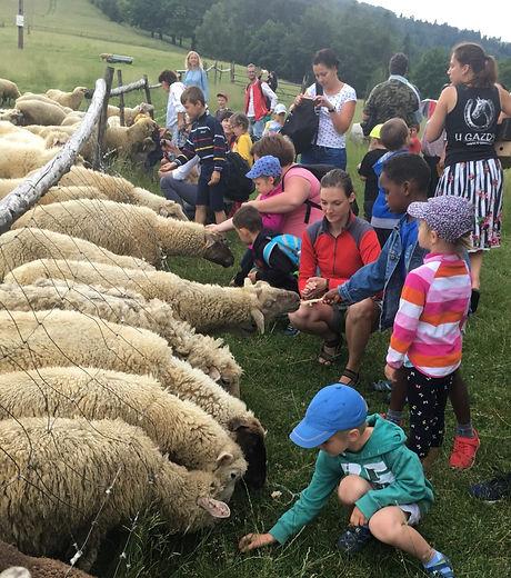 karmienie owieczek.jpg