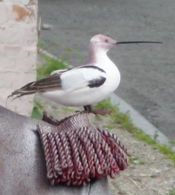 Marblehead - Bird Mascot Detail