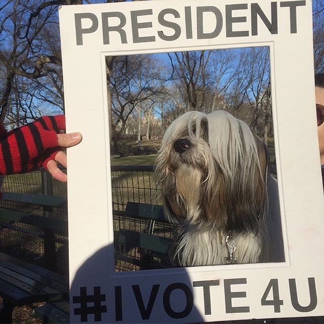 Fiona is President of Little Dogs