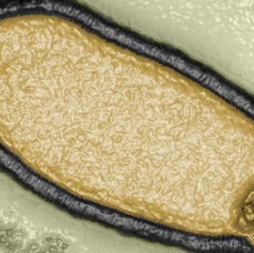 Virus préhistorique : Future menace ?