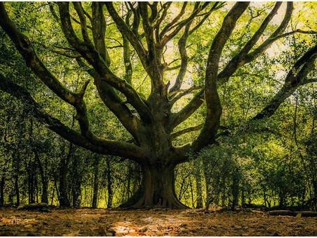 Brocéliande : la forêt légendaire.