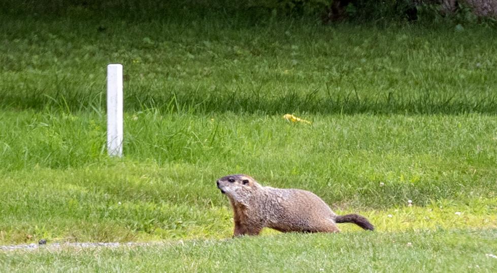 wildlifeclinic-golf2021-39.jpg