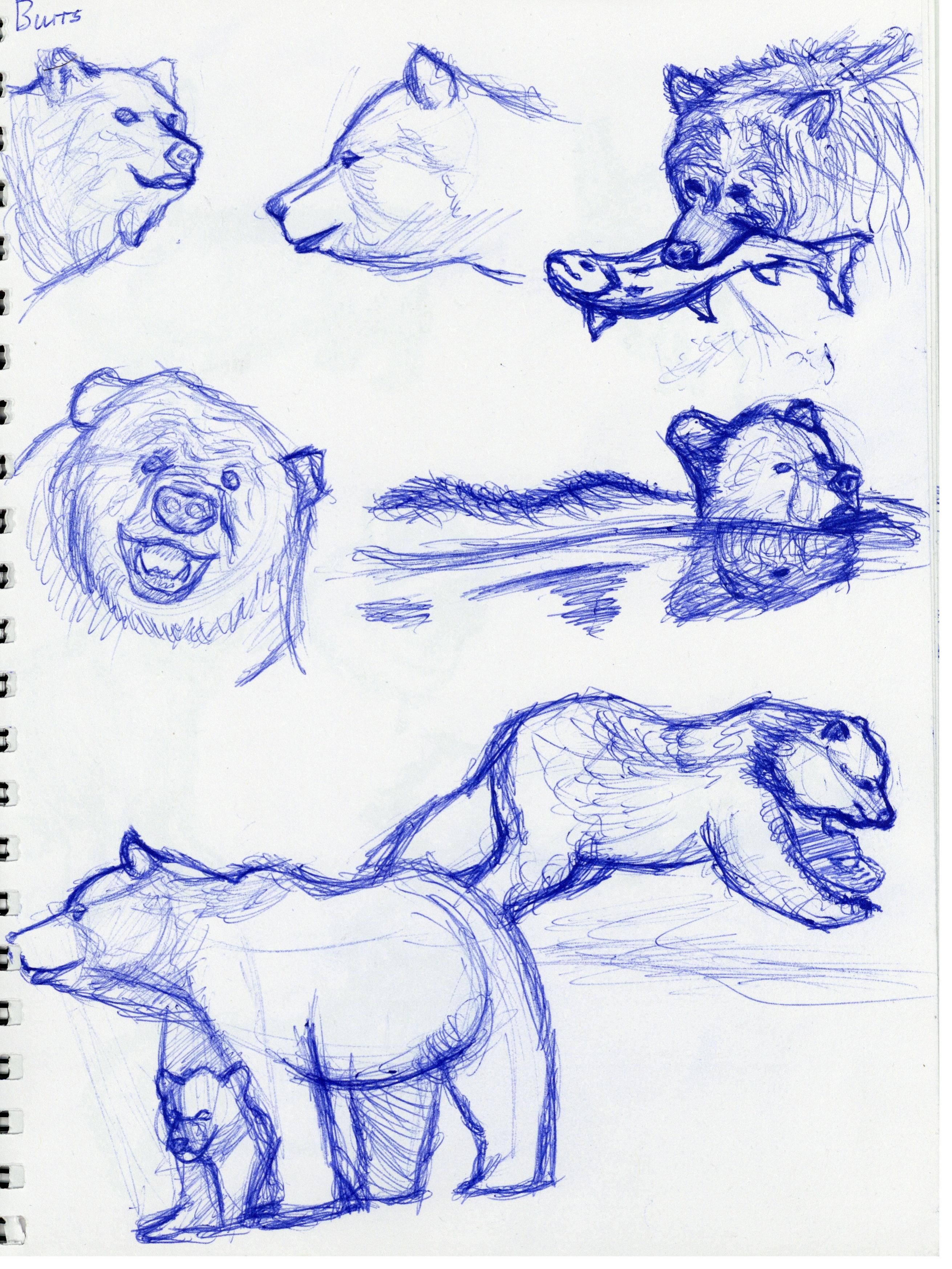 Bears Study